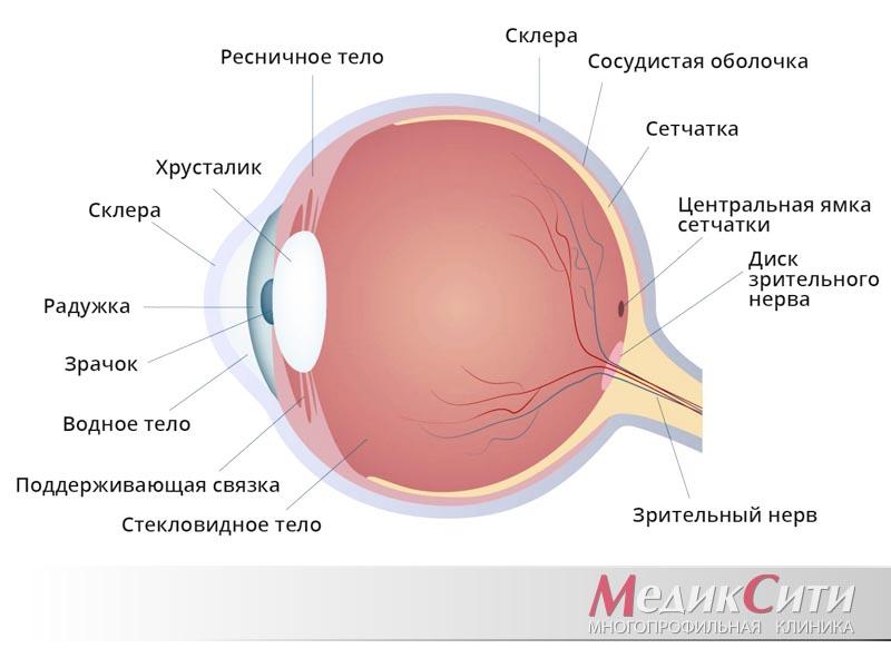 Язва роговицы глаза у человека и животных: лечение, симптомы, причины, диагностика, и осложнения