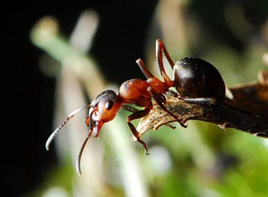 Виды муравьёв - фото и описание, отличия, польза и опасность