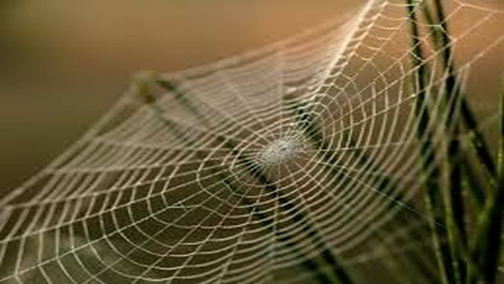 Из чего сделана паутина?