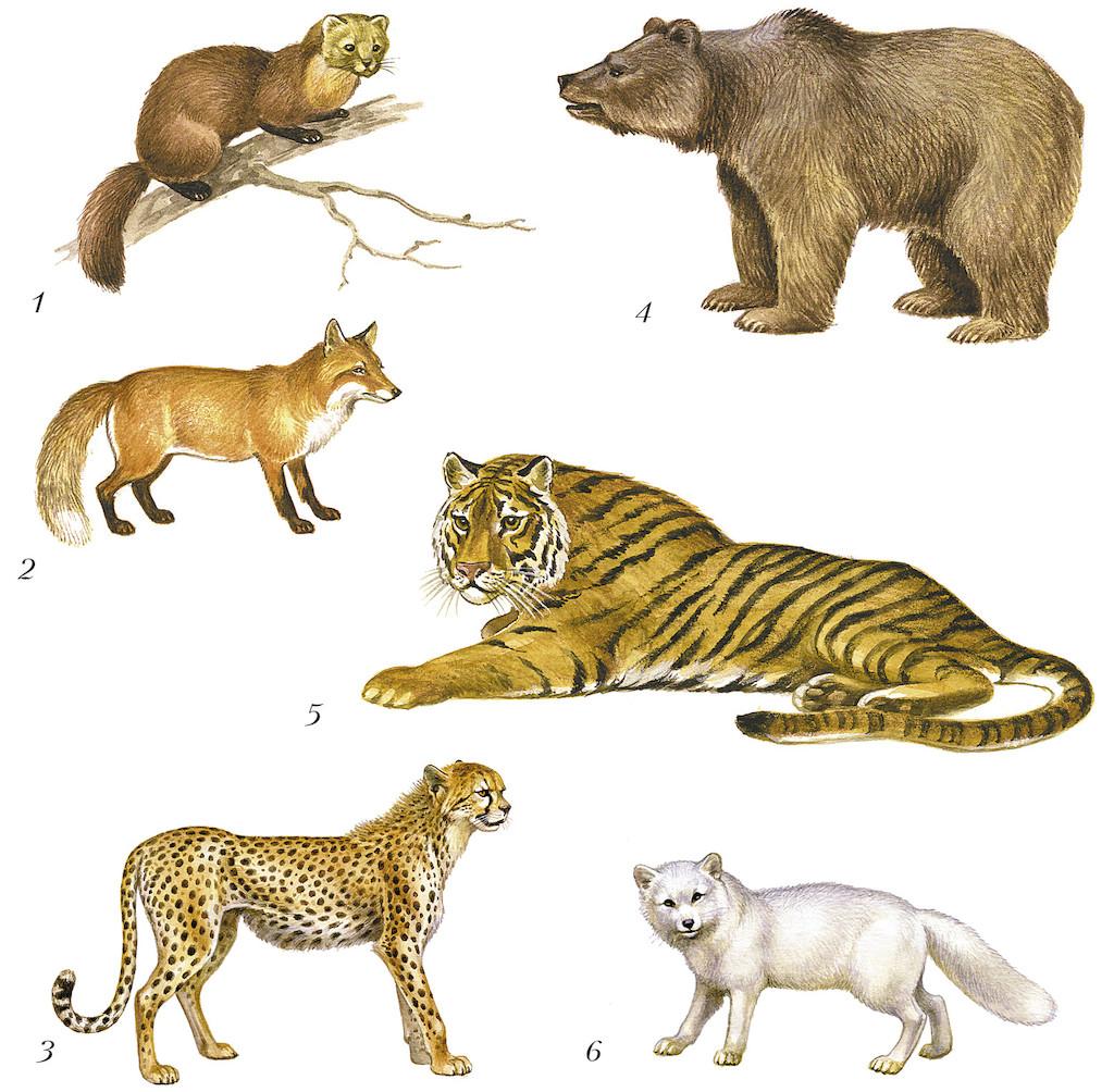 Плацентарные млекопитающие – особенности размножения животных