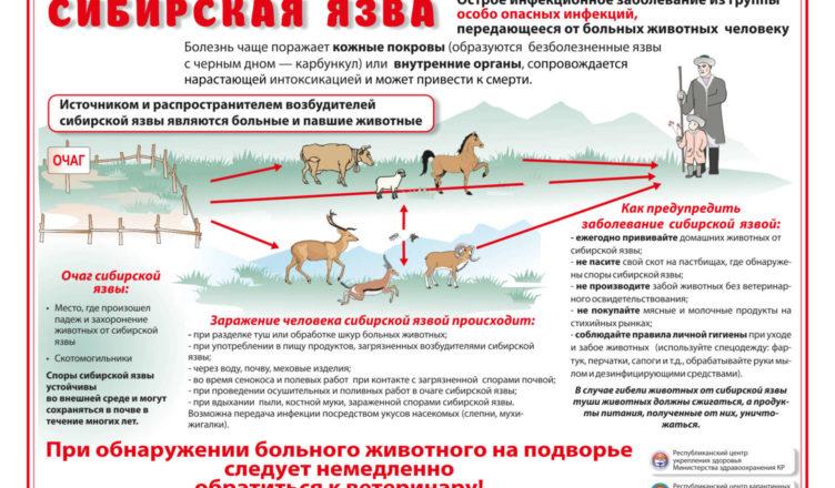 Сибирская язва - возбудитель, симптомы у человека, лечение и препараты   здрав-лаб