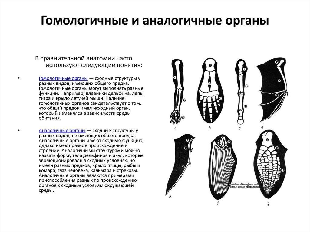 Гомология (биология) — википедия. что такое гомология (биология)
