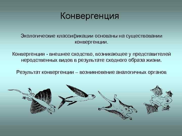 Дивергенция - это в биологии... примеры, определение и особенности