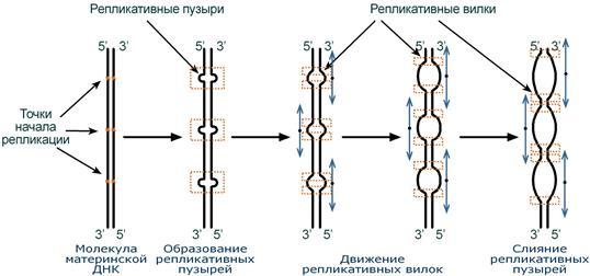 Как устроена mysql-репликация / блог компании конференции олега бунина (онтико) / хабр