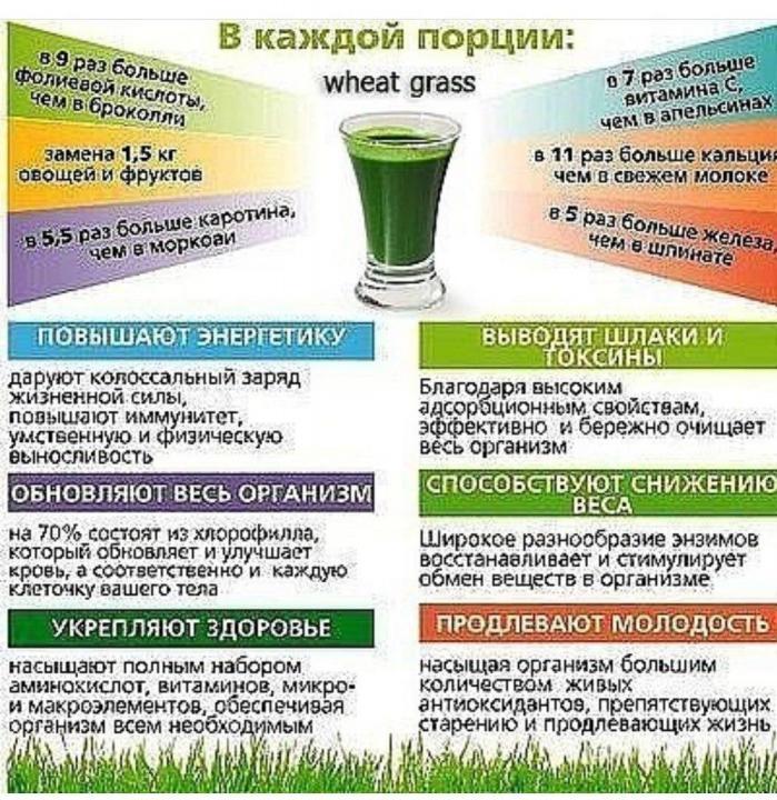 Витграсс – правда, польза и вред продукта для организма
