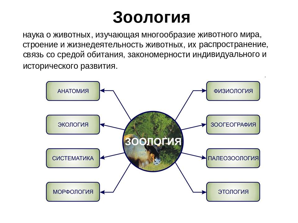 Зоология – наука о животных, их признаках и многообразии