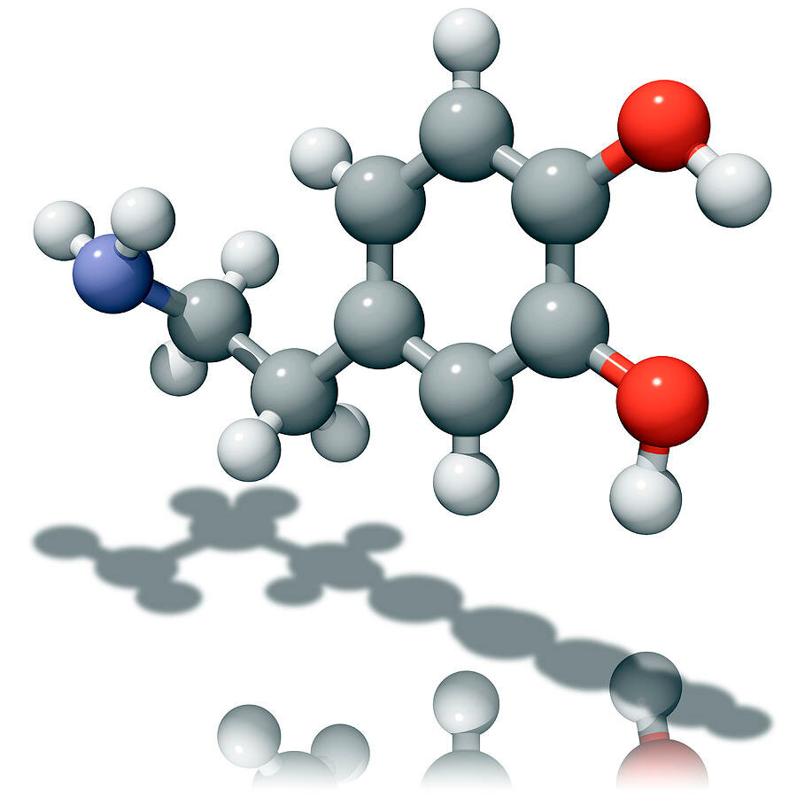 Как повысить уровень дофамина организме?