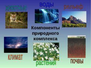 Природные ⚠️ зоны: какие бывают, их характеристики и особенности