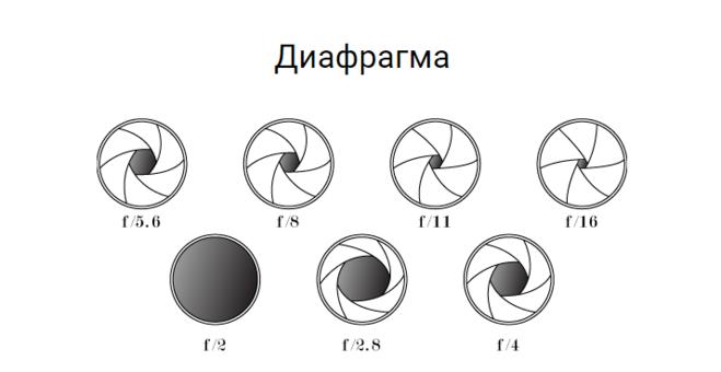Описание и функции диафрагмы. какие животные имеют этот орган?