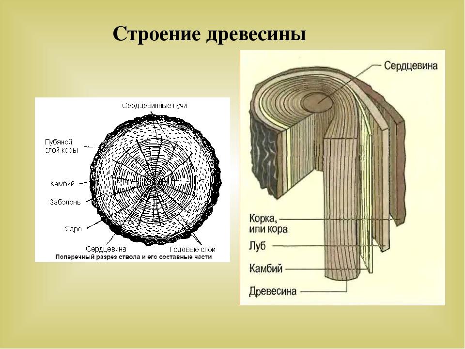 Древесина — википедия с видео // wiki 2