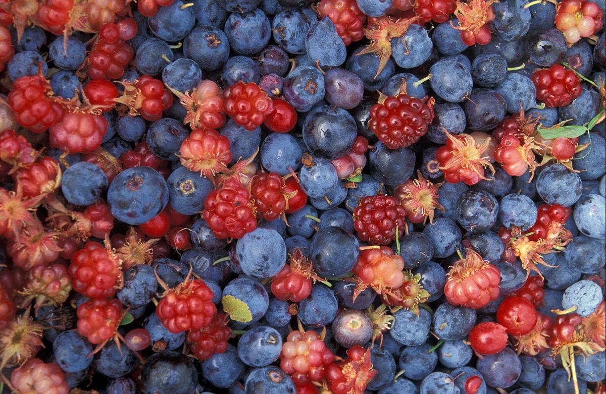 Виды ягод: список названий с описанием полезных свойств, рецепты | food and health