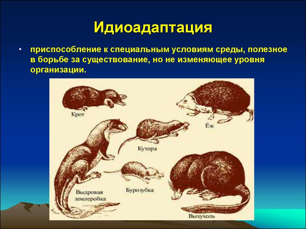 Что такое идиоадаптация? это один из способов хода эволюции