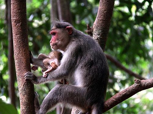 Виды обезьян с названиями, основные характеристики каждого представителя