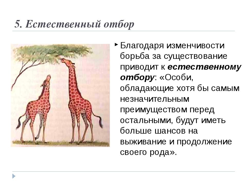 Что такое естественный отбор? виды естественного отбора (таблица)