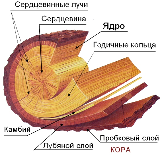 Что такое древесина? виды древесины