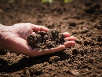 Все, что следует знать о почвенном профиле