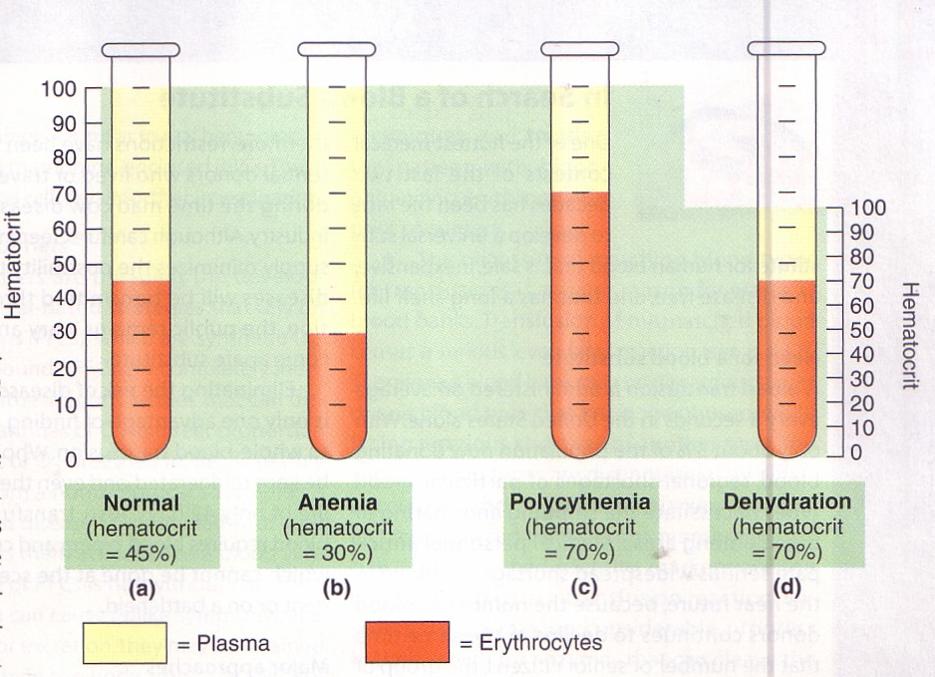 Что такое гематокрит в анализе крови: почему бывает повышен, за что отвечает