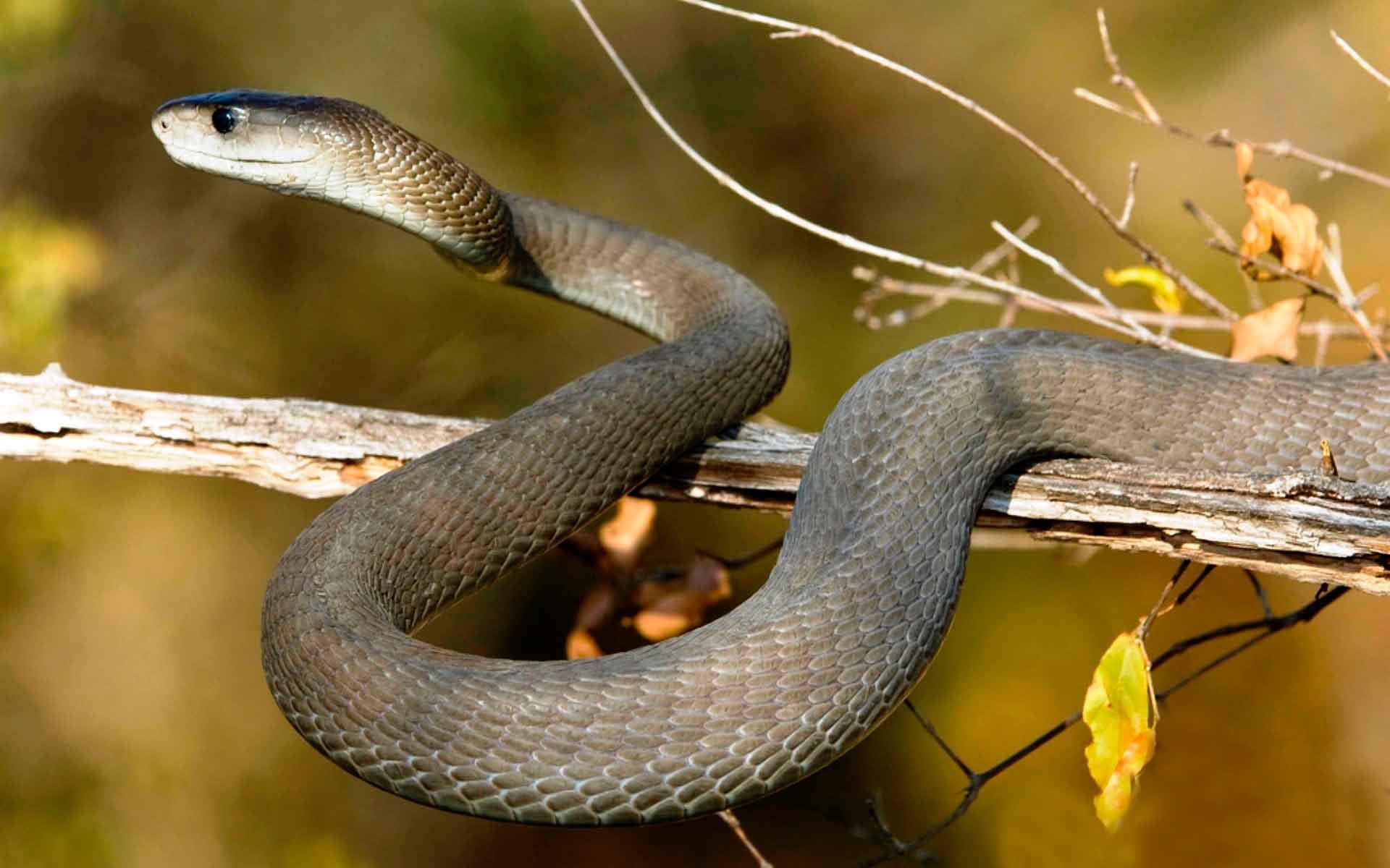 Змеи – виды и описание с названиями, характеристики, типы | фото и видео змей