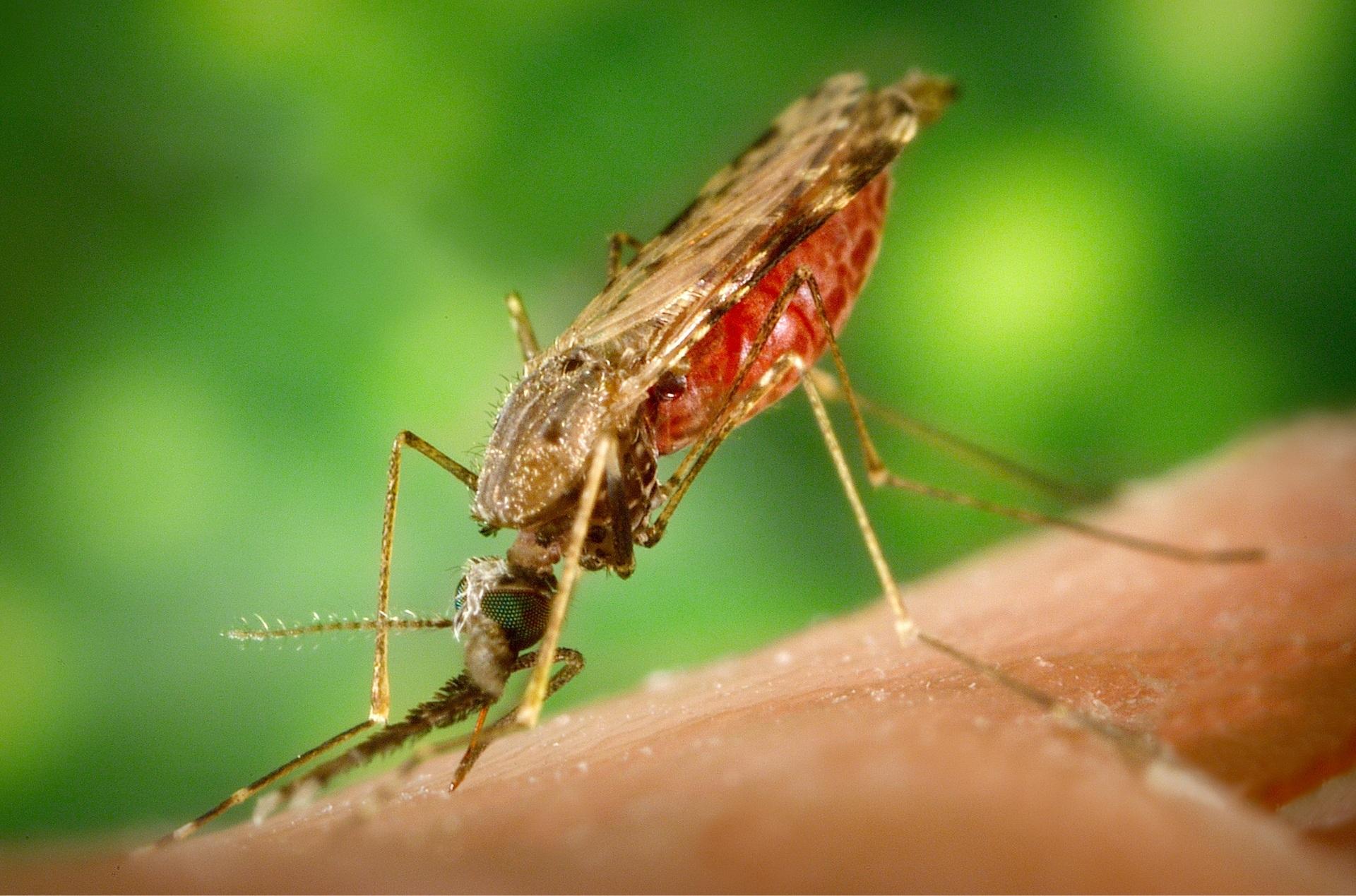 Малярия | энциклопедия кругосвет
