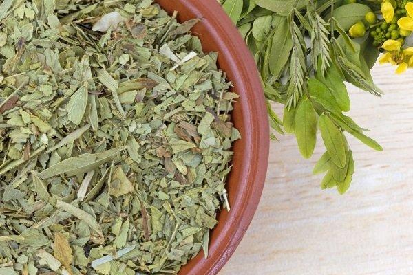 Лечебные свойства сенны — александрийская трава