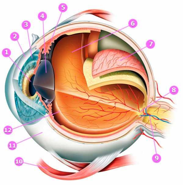 Физиогномика: радужная оболочка глаза
