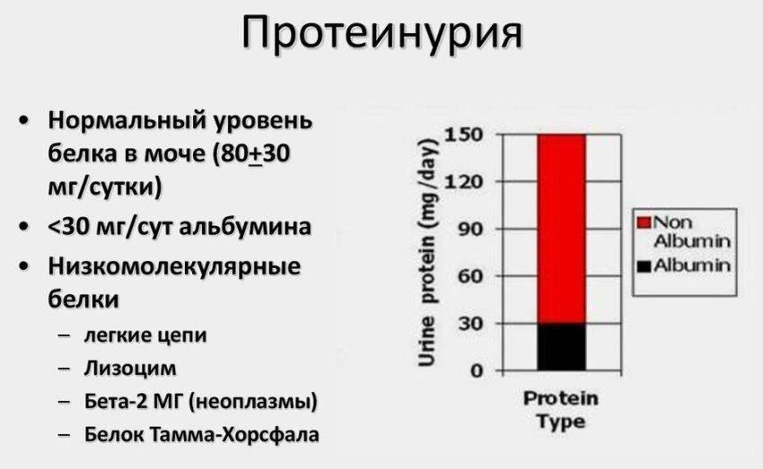 Протеинурия: что это такое, причины и симптомы