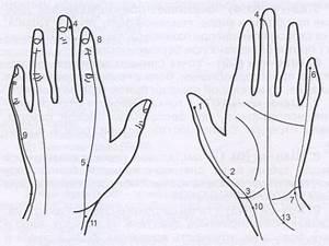 Читать книгу су-джок. целительные точки нашего тела. просто и действенно дмитрия коваля : онлайн чтение - страница 5