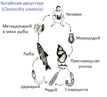 Что такое паразиты
