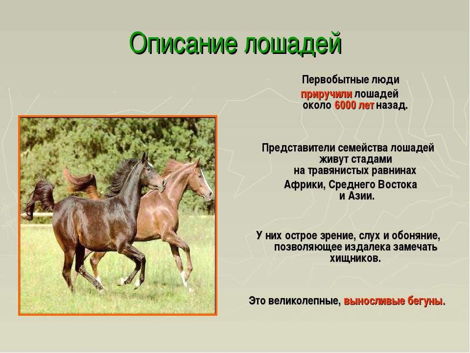 Скачки на лошадях на ипподроме - история, скачки через барьер, стипль-чез, гладкие   лошадиные скачки мире - особенности