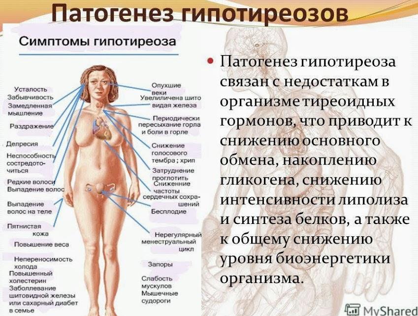 Женские гормоны и их влияние на организм
