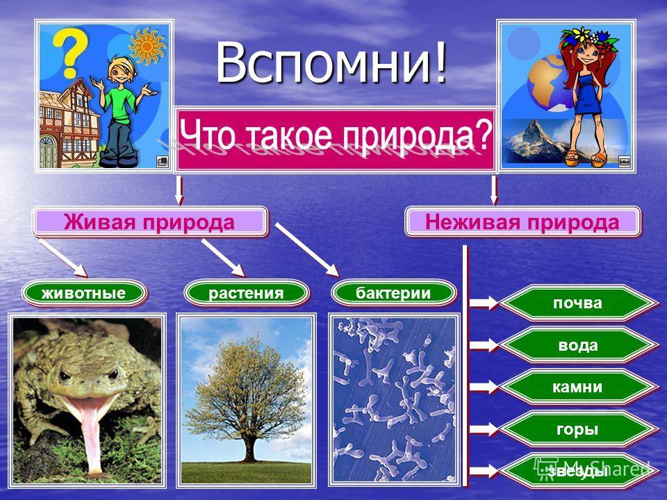 Человек как объект живой природы. чем отличаются живые виды природы от неживых. что такое живая природа: признаки, описание, примеры