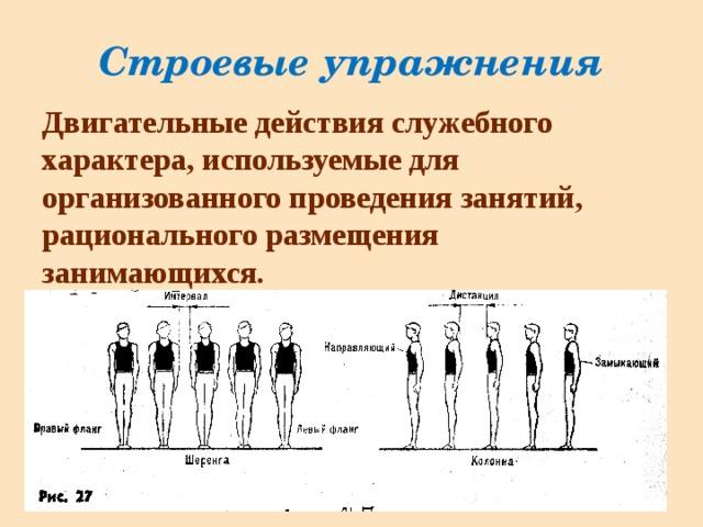 Гимнастика — строевые упражнения на месте и в движении