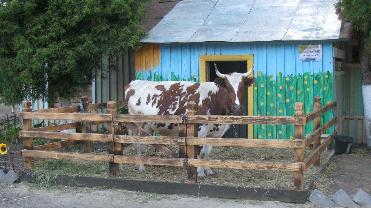 Что такое ранчо: это ферма или дача?