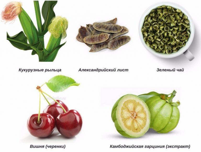 Что такое александрийский лист? трава лекарственная. описание, распространение, сбор, заготовка, применение, рецепты