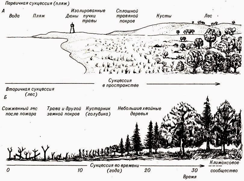 Сукцессия - что это такое, ее виды, а так же примеры первичной и вторичной сукцессий | ktonanovenkogo.ru