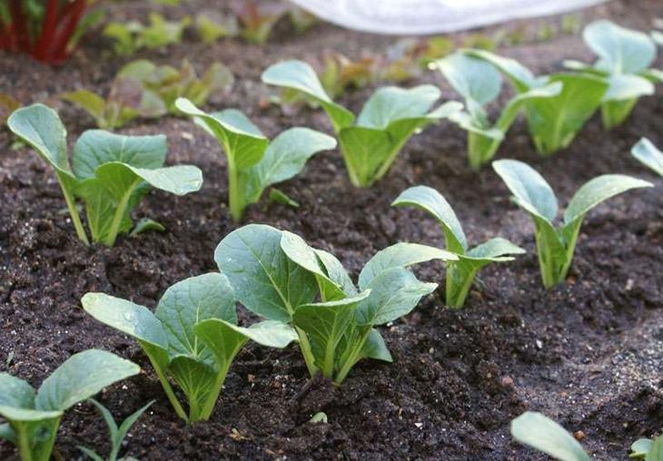 Овощ брюква: полезные свойства и рецепты блюд