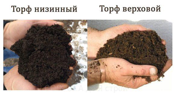 Чернозем и торф: найди 6 отличий