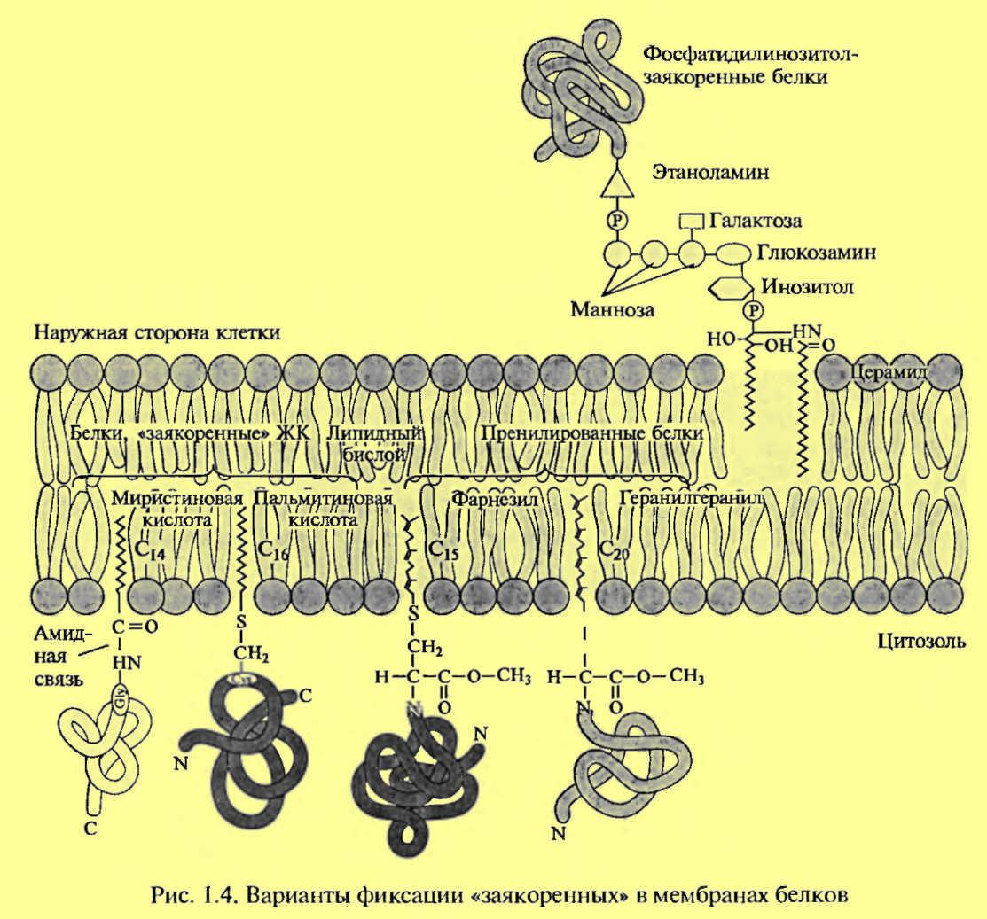 Что такое мембрана, каковы состав и свойства мембранной ткани, как ухаживать за этим материалом?
