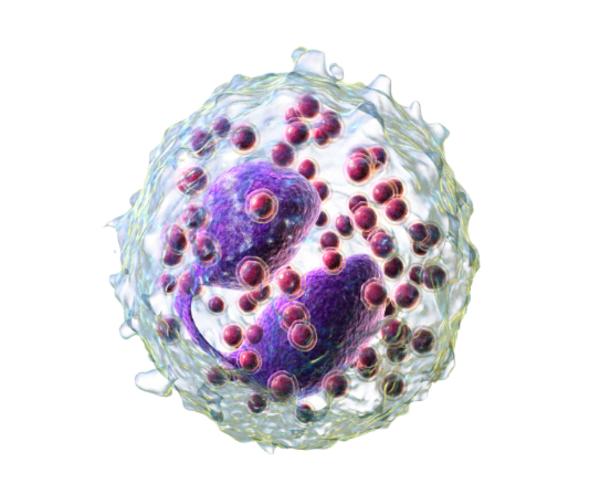 Эозинофилы повышены в крови: причины у взрослого, как понизить