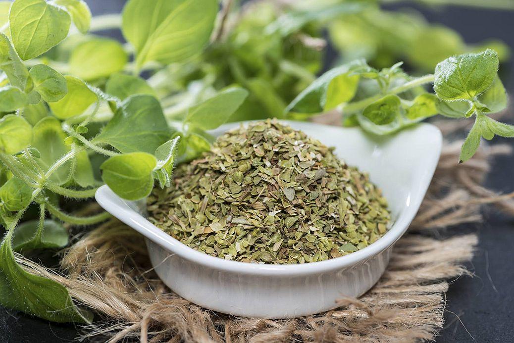 Орегано (душица обыкновенная) – польза и вред, нюансы выращивания на ydoo.info
