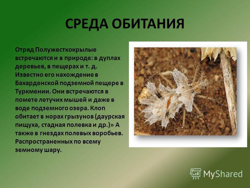 Основные среды жизни живых организмов и их характеристики кратко