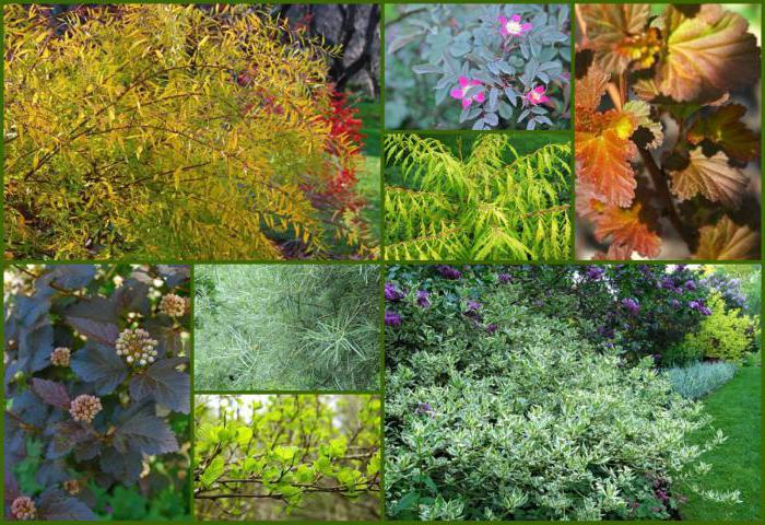 Пищевые культурные растения