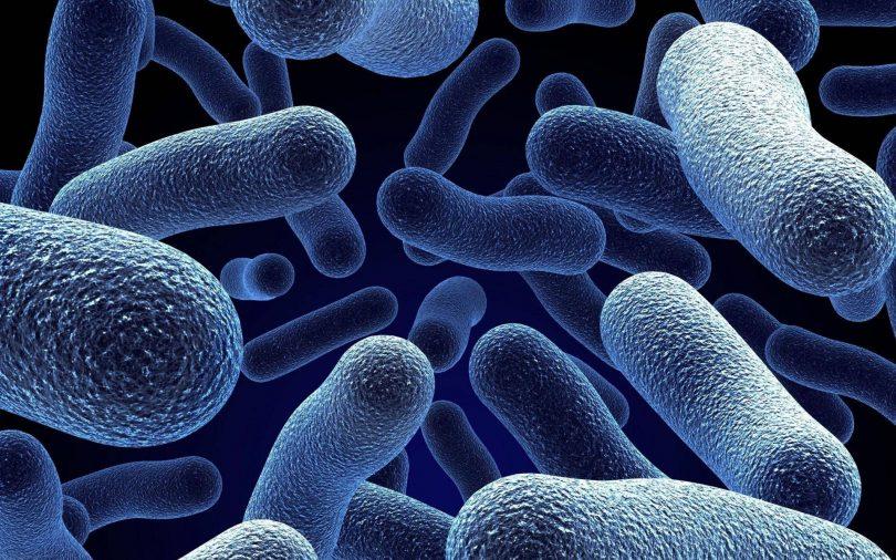Предмет и задачи микробиологии: что изучает, роль в системе наук