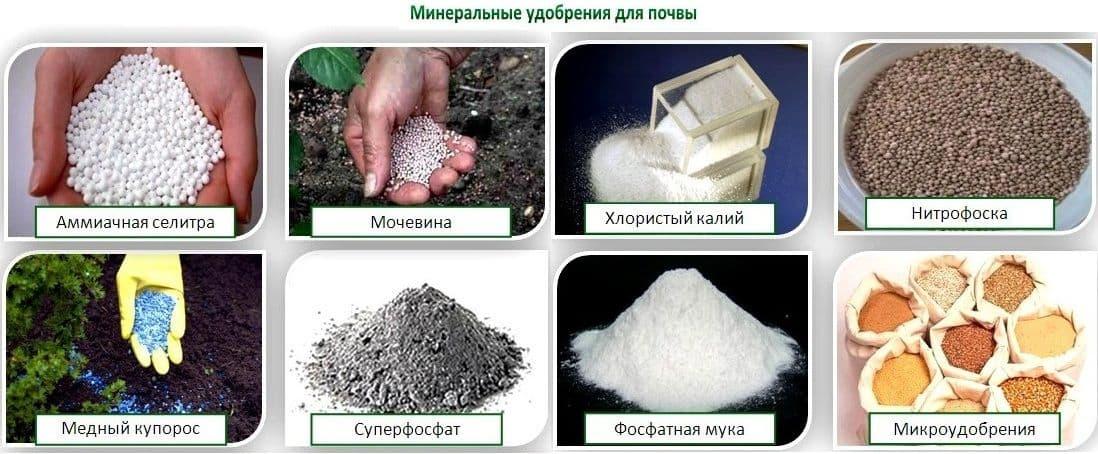 Как осуществляется компостирование отходов