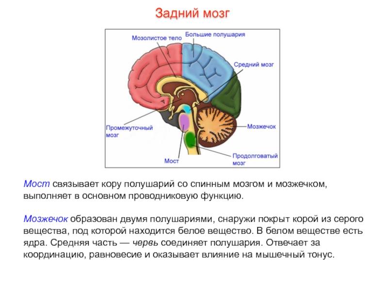 Нарушение работы мозжечка