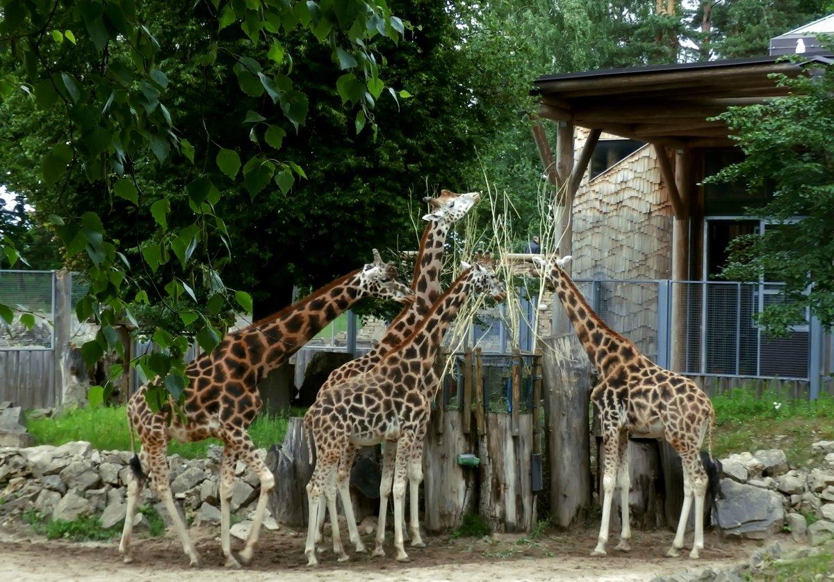 Зоопарк — викифур, русскоязычная фурри-энциклопедия