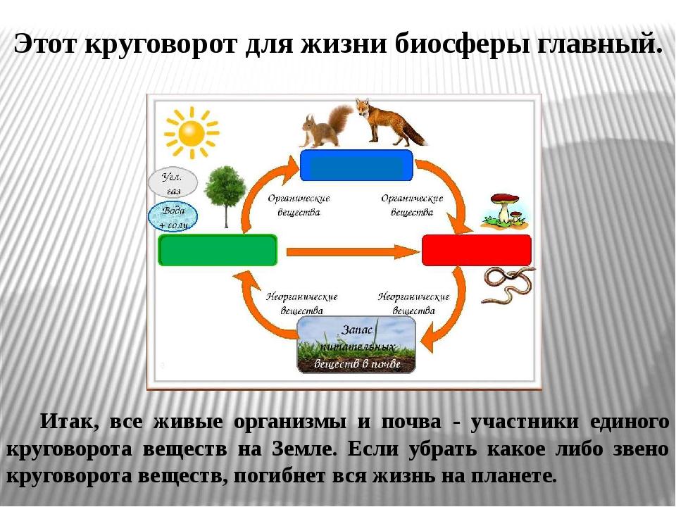 Что такое биологический круговорот веществ?