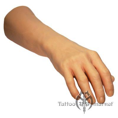 Кости предплечья у человека: анатомия, фото на скелете и где находится, внешняя сторона предплечья, мышцы плеча и предплечья