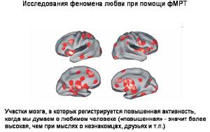 Что такое любовь на самом деле с точки зрения науки и психологии