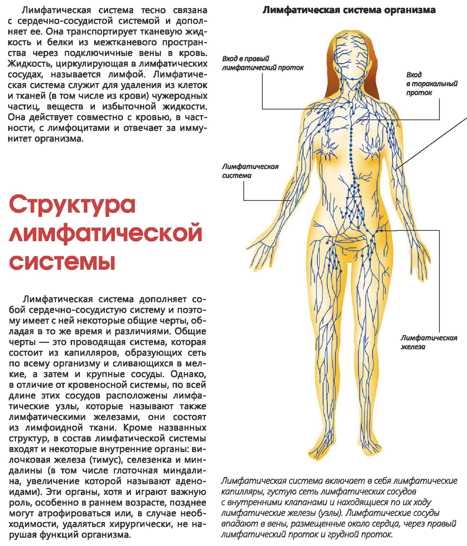 Лимфостаз: что это такое, лечение массажем и народными средствами